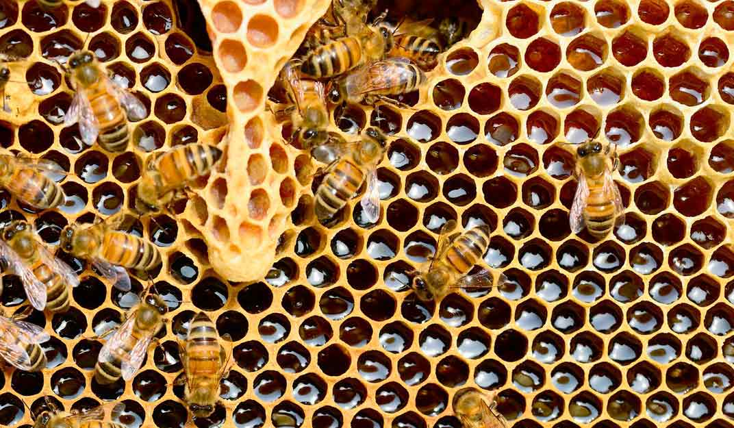 Sabons-de-mel-a-granel-bresca-abelles